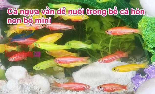 Cá nuôi trong hồ cá mini