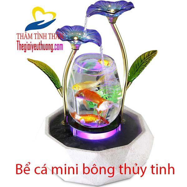 Bể cá mini bông thủy tinh một vẻ đẹp khó cưỡng